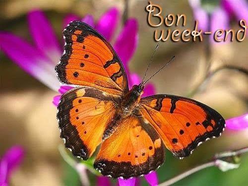 http://centerloup.c.e.pic.centerblog.net/b0d751fd.jpg